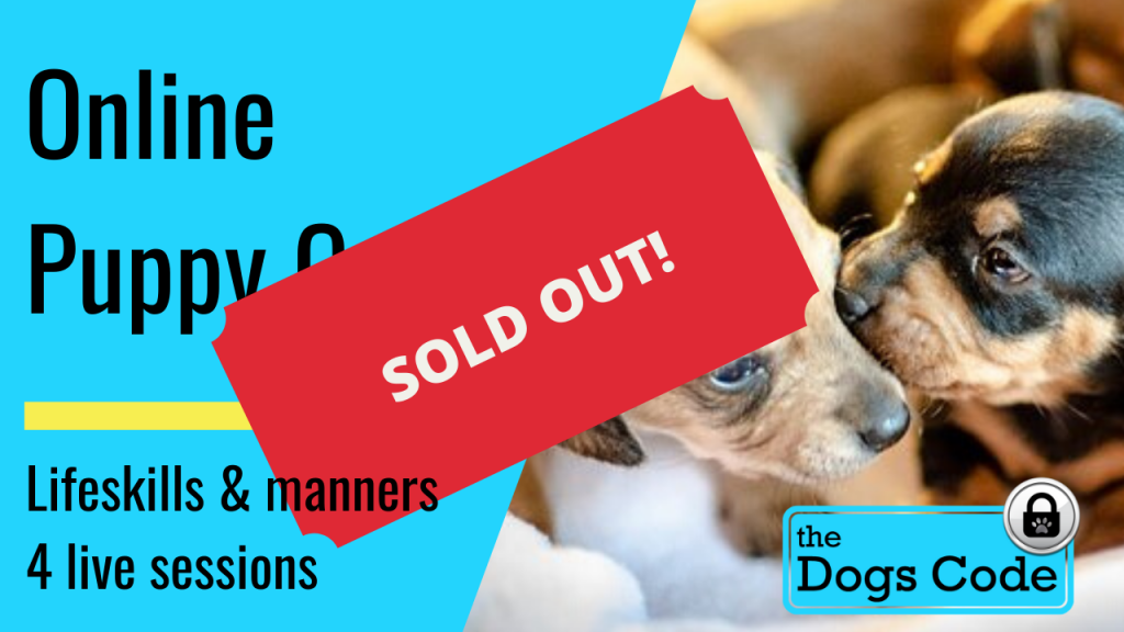 ONLINE PUPPY TITLE PAGE SOLD OUT