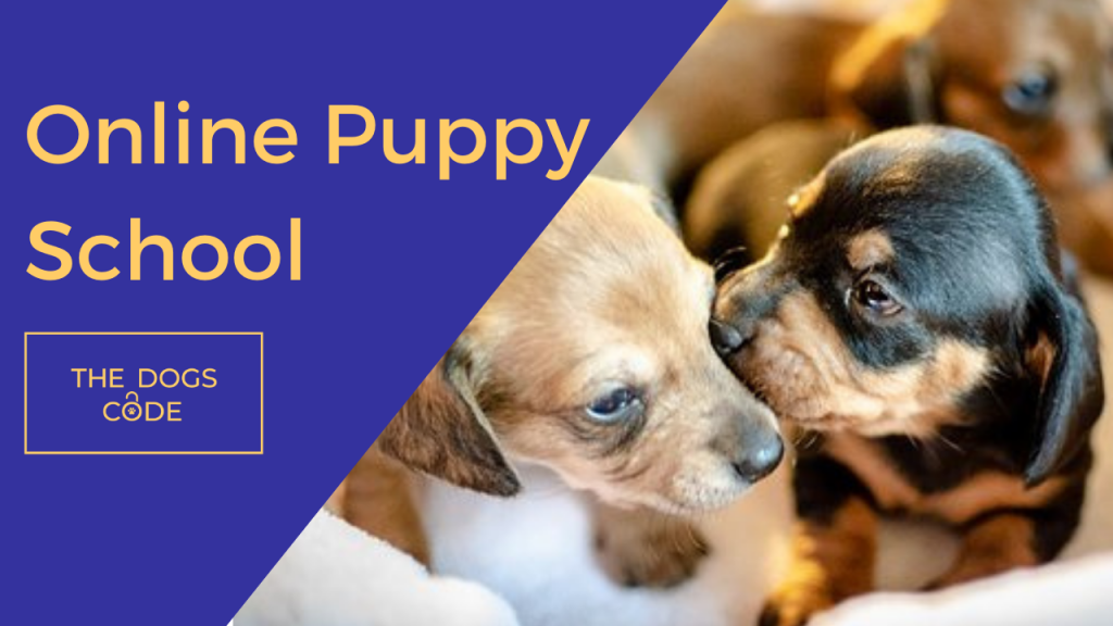 The Dogs Code Online Puppy School
