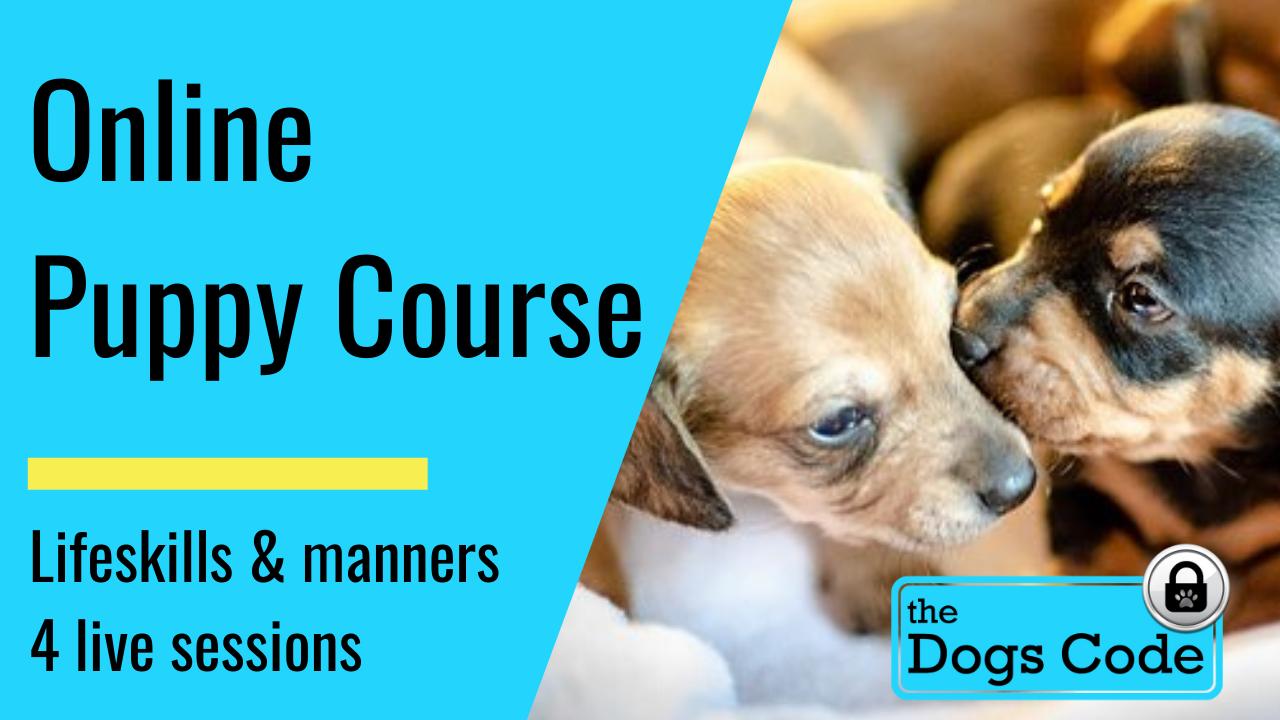 Online Puppy School January