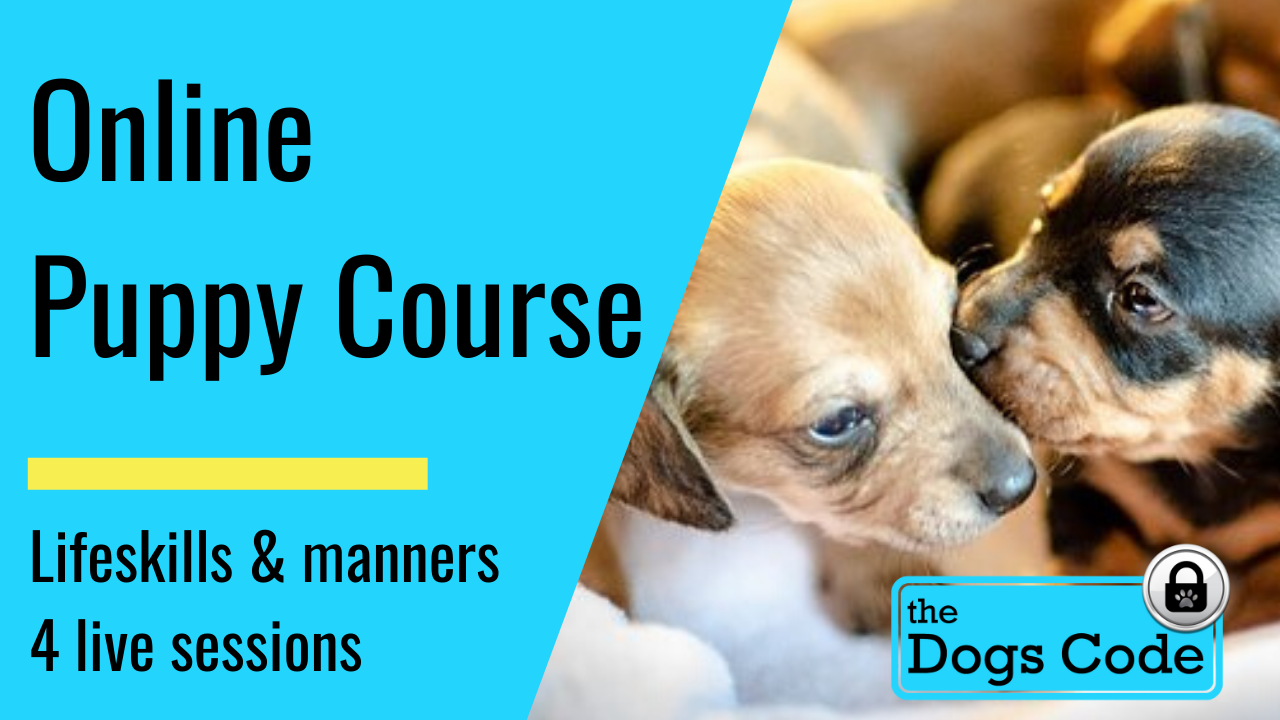 Online Puppy Course: Starts Wednesday 5th August 5.30pm-7pm